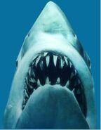 Jaws the Shark