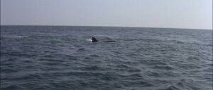 Jaws2-movie-screencaps com-13031