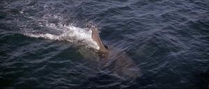 Jaws-movie-screencaps com-9709