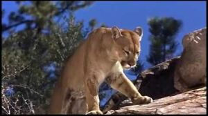 Walt Disney's Big Red 1962 Big Red Vs the Mountain Lion