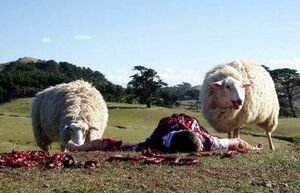 Black-sheep(1)-1-