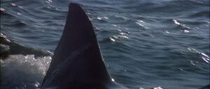 Jaws2-movie-screencaps com-13107