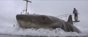 Jaws-movie-screencaps com-12000