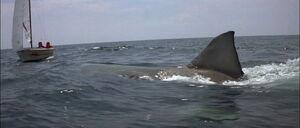 Jaws2-movie-screencaps com-9838