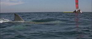 Jaws2-movie-screencaps com-10071