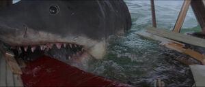 Jaws-movie-screencaps com-14067