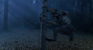 Grey Werewolf stake