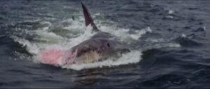 Jaws-movie-screencaps com-14287