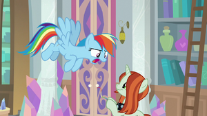 Rainbow Dash yells at the photographer S8E13