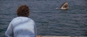 Jaws-movie-screencaps com-12325