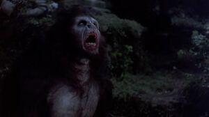 Vlad as werewolf