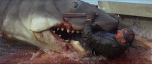 Jaws-movie-screencaps com-13980
