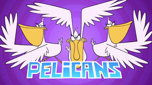 Pelicans Intro