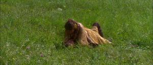 Anakin Padmé meadow