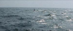 Jaws-movie-screencaps com-14248