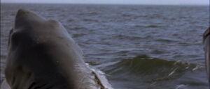 Jaws2-movie-screencaps com-12329