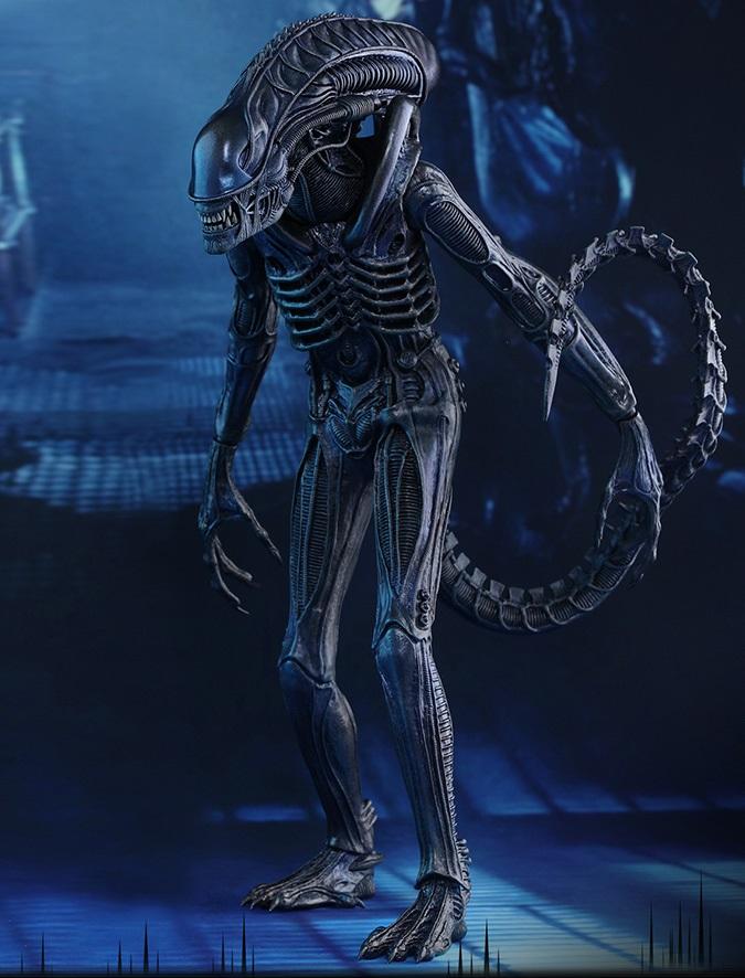 Xenomorph Warrior
