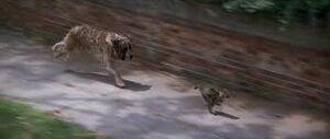 Cujo chasing General