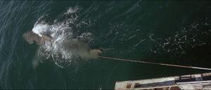 Jaws-movie-screencaps com-12687