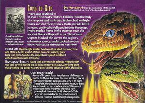 Hydra back