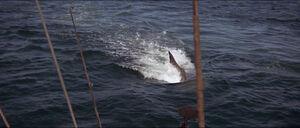 Jaws-movie-screencaps com-9778