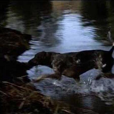 Walt Disney's Savage Sam 1963 Sam's on the Trail of the Native Americans