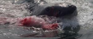 Jaws-movie-screencaps com-14295