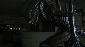 Alien-isolation-gallery-3