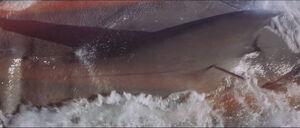Jaws-movie-screencaps com-11797