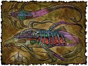 Aboleth - Anatomy