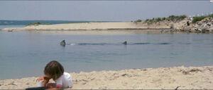 Jaws-movie-screencaps com-7297