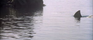 Jaws2-movie-screencaps com-12930