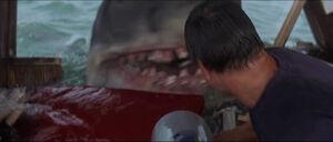Jaws-movie-screencaps com-14057