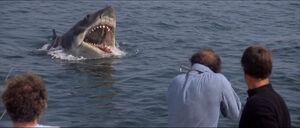 Jaws-movie-screencaps com-12340