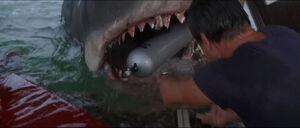 Jaws-movie-screencaps com-14065