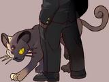 Giovanni (Pokémon)