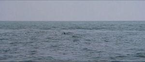 Jaws-movie-screencaps com-14118