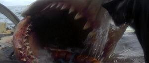Jaws-movie-screencaps com-13942