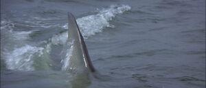 Jaws2-movie-screencaps com-9981