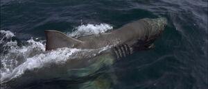 Jaws2-movie-screencaps com-13094