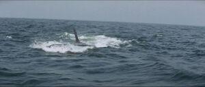 Jaws-movie-screencaps com-14269