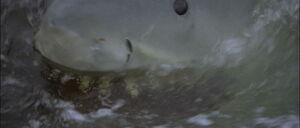 Jaws2-movie-screencaps com-12874