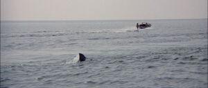 Jaws2-movie-screencaps com-2183