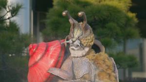 Cheetah Snail