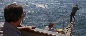 Jaws-movie-screencaps com-10017