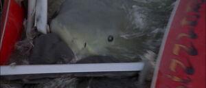 Jaws2-movie-screencaps com-12605