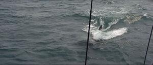 Jaws-movie-screencaps com-9828