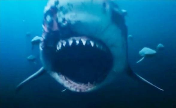Bull Sharks (Deep Blue Sea 2)