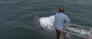 Jaws-movie-screencaps com-11790