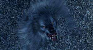 Grey Werewolf snatch